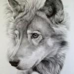 Los lobos. Texto expositivo.